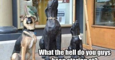 What The?!?! - Dog humor