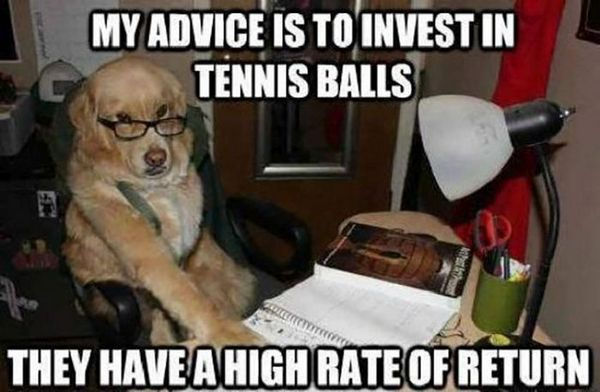 Business Dog - Dog humor