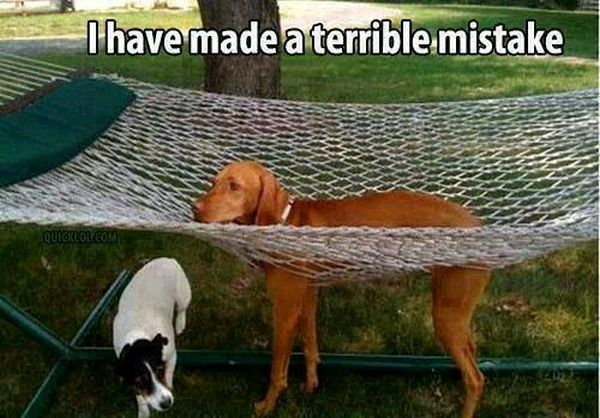 I Have Made A Terrible Mistake - Dog humor