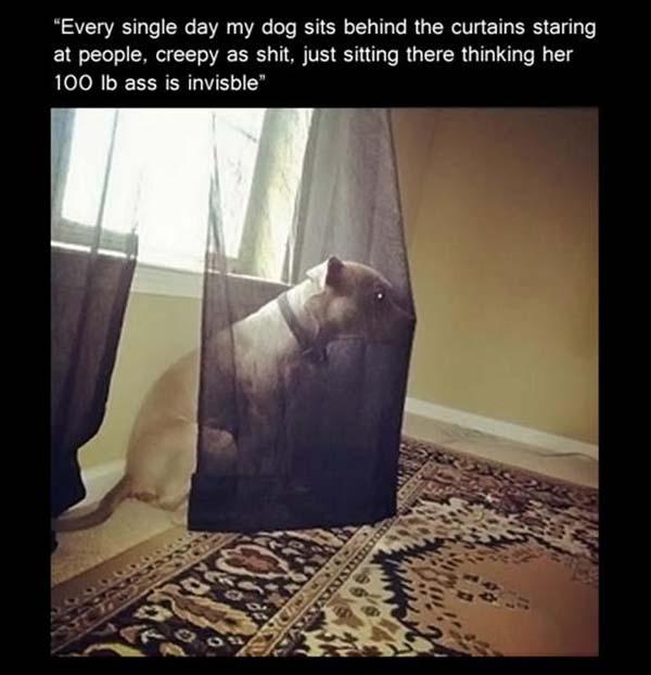 Creepy Stalker - Dog humor