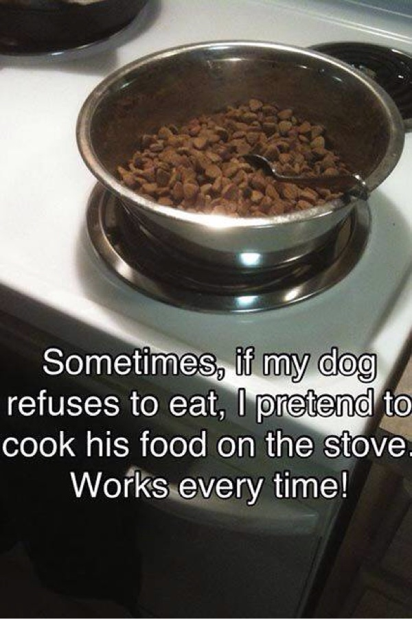 Dog Food Hack - Dog humor