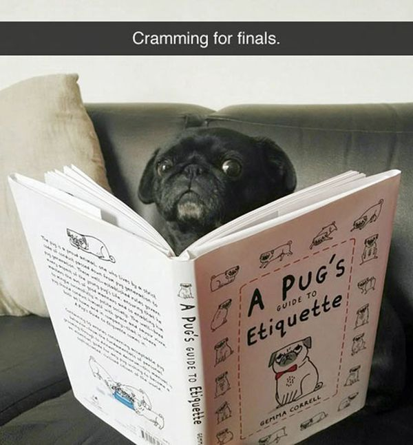 Cramming For Finals - DOg humor