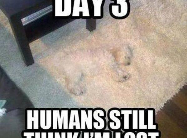 Day 3 - Dog humor