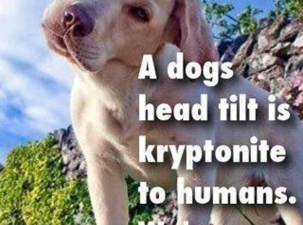Kryptonite To Humans - Dog humor