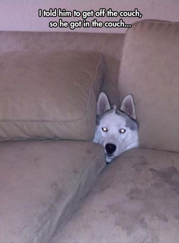 I Told Him To Get OF The Couch... - Dog humor