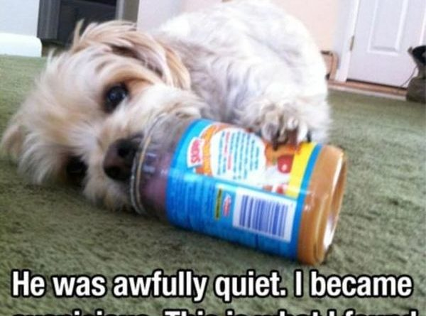 He Was Awfully Quiet - Dog humor