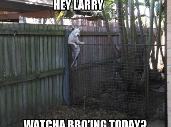 Hey Larry - Dog humor