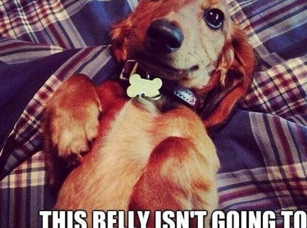 Hey You - Dog humor