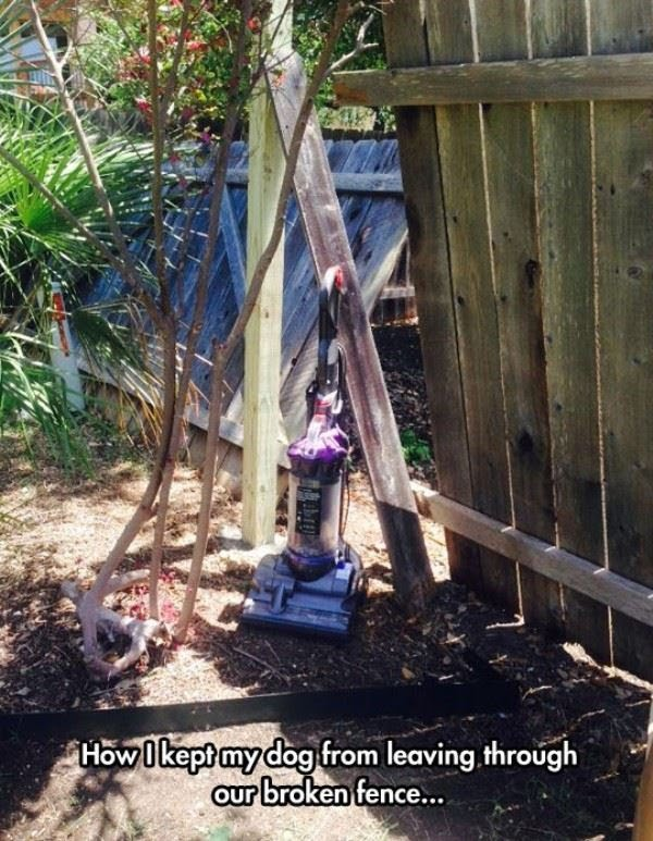 How to keep your dog from escaping through the broken fence - Dog humor