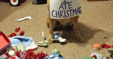 Someone Goes To Santa's Naughty Boy List - Dog humor