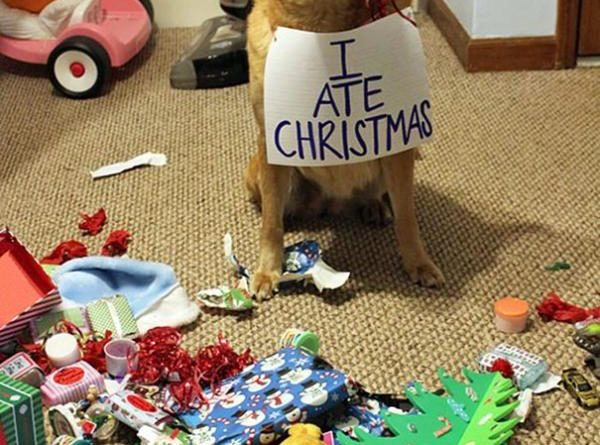 Someone Goes To Santa's Naughty Boy List - Dog humor