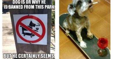 I Don't Know Who This Dog Is - Dog humor