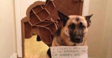 I Locked Myself In The Bathroom - Dog humor