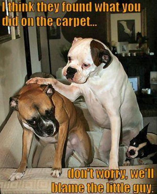I Think They Found What You Did On The Carpet - Dog humor