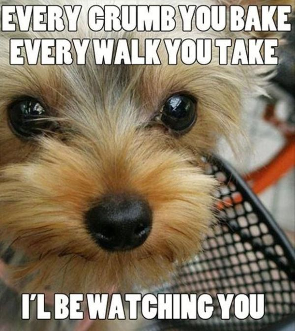 I'll be watching you... - Dog humor