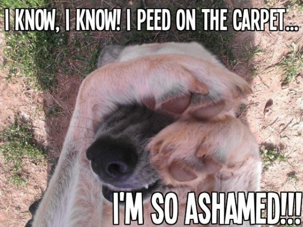 I'm So Ashamed - Dog humor