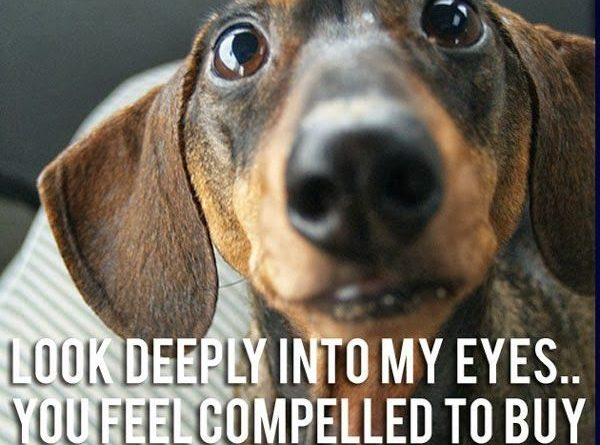 Look Deeply Into My Eyes... - Dog humor
