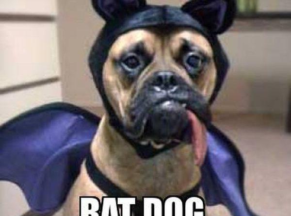 Na na na na na na! - Dog humor