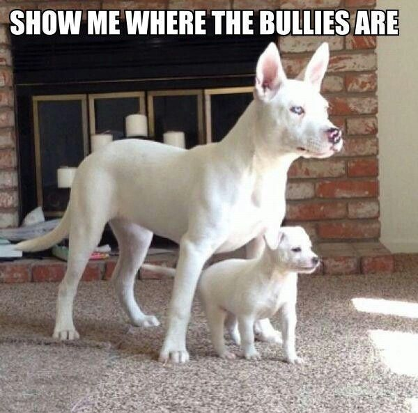 Protective Mom - Dog humor