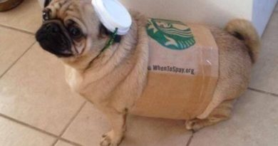 Pugkin Spice Latte - Dog humor