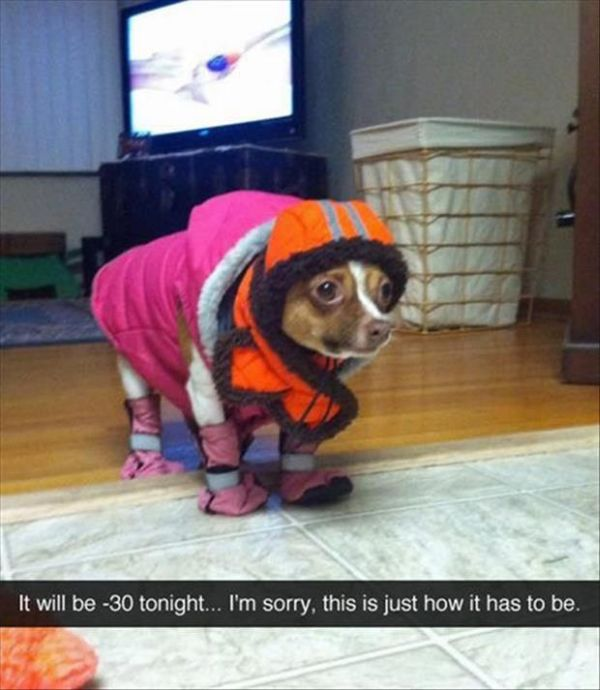 Ready For A Winter Walk - Dog humor