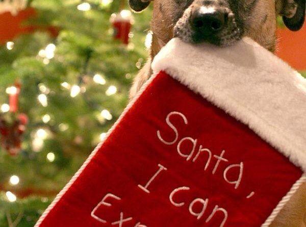 Santa I Can Explain - Dog humor