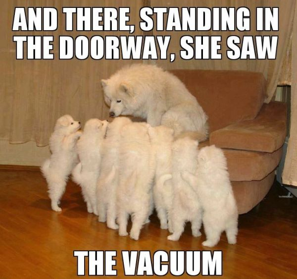Scary Storytelling Dog - Dog humor