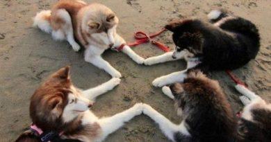 Secret Meeting - Dog humor