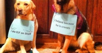 The Elf On The Shelf - Dog humor