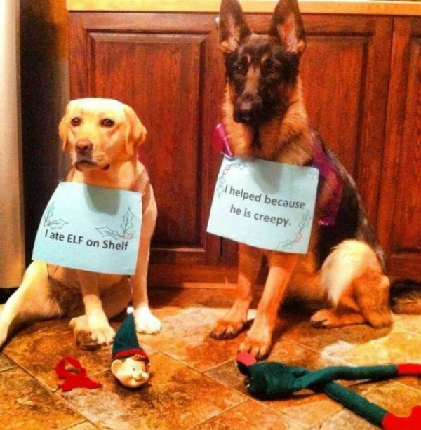 The Elf On The Shelf - Dog humor