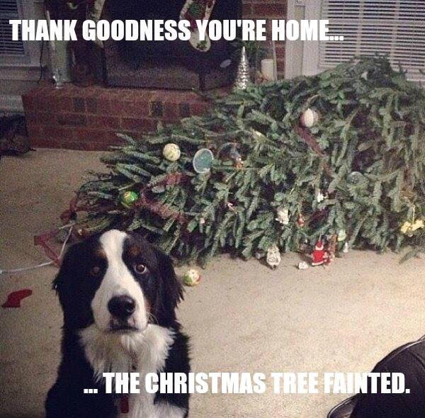 Thanks God You're Home - Dog humor