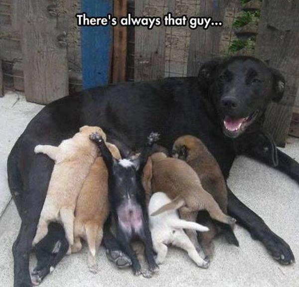 There's Always That Guy - Dog humor