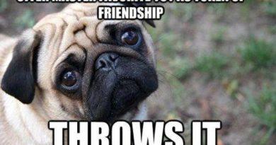 Token Of Friendship - Dog humor
