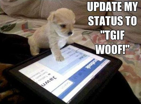 Update my status to TGIF Woof! - Dog humor