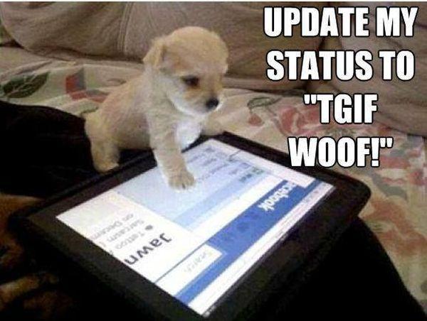 Update my status to TGIF Woof! - Dog humor