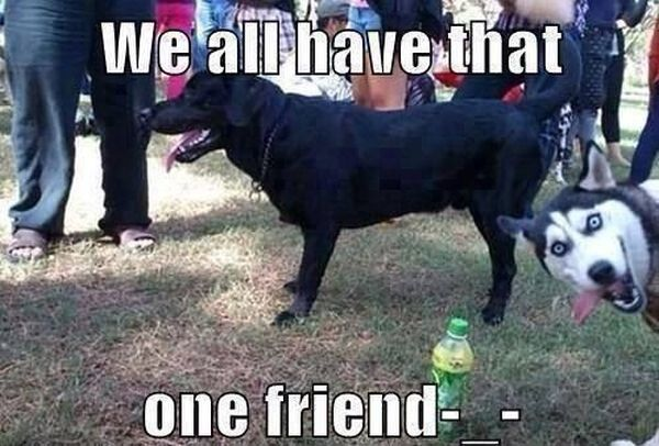 We all have that one friend - Dog humor