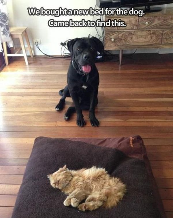 Weird Turn Of Events - Dog humor