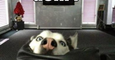 What'cha Doin? - Dog humor