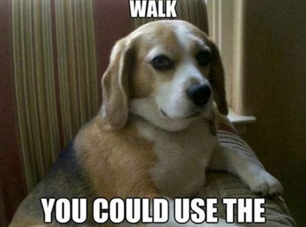 Why Don't You Take For A Walk? - Dog humor