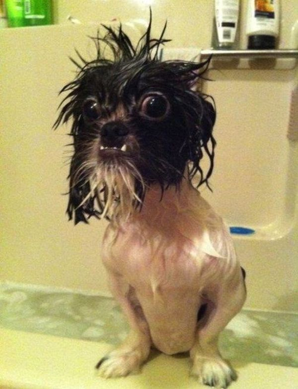 You Will Regret This - Dog humor