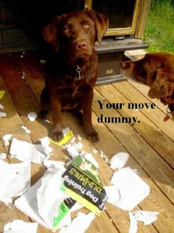 Your Move Dummy - Dog humor
