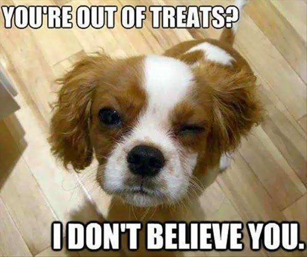 You're Out Of Treats? - Dog humor