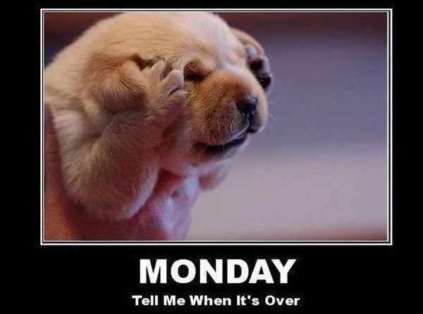 Monday - Dog humor