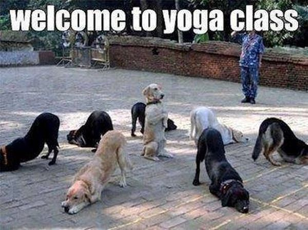 Welcome To Yoga Class - Dog humor