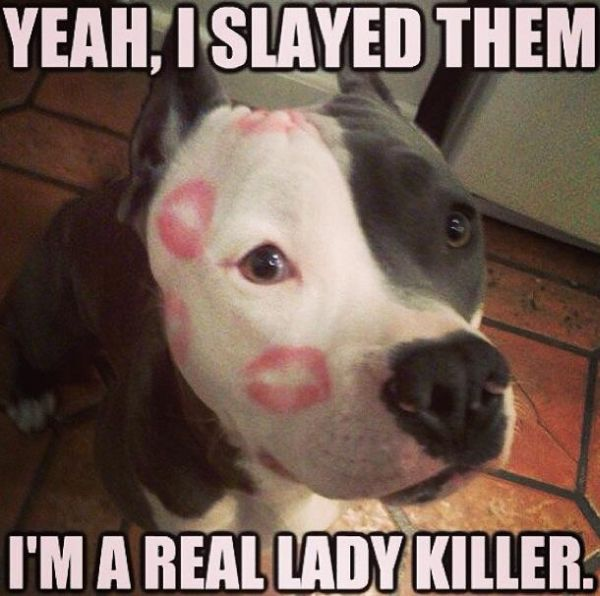Yeah, I Slayed Them - Dog humor