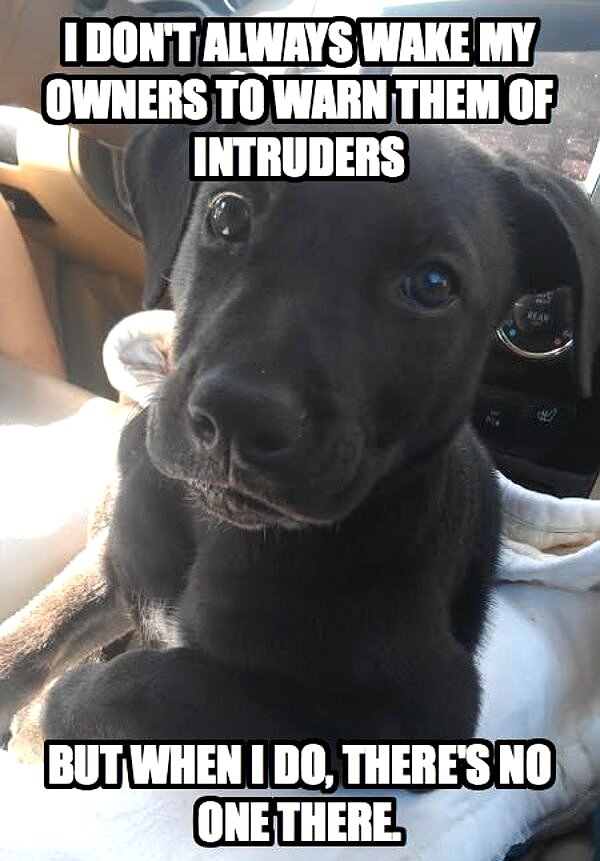 I Don't Always Wake My Owners To Warn Them Of Intruders - Dog humor