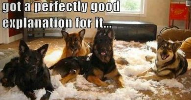 I Know This Looks Bad, But... - Dog humor