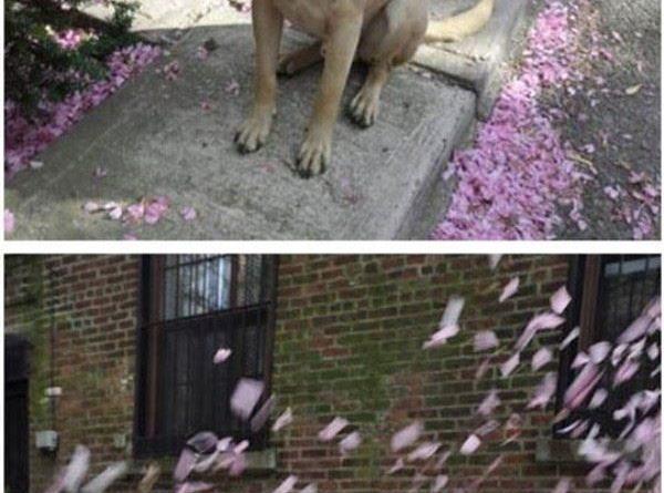 I Luv Spring - Dog humor