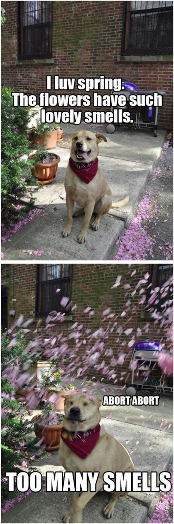 I Luv Spring - Dog humor
