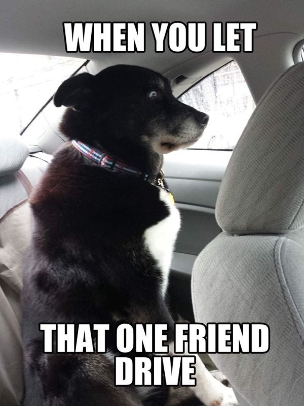 That Moment When... - Dog humor
